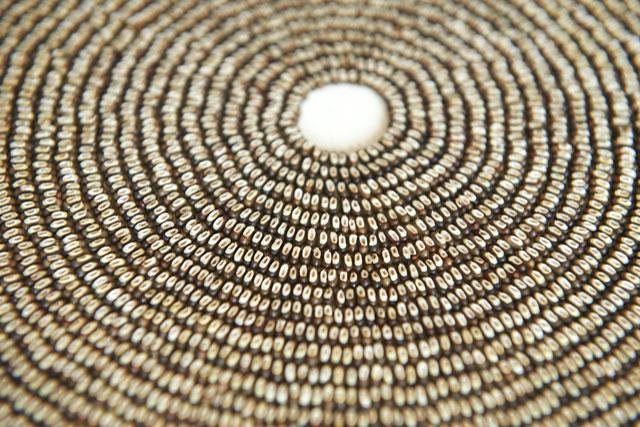 2010 Seed Meditation